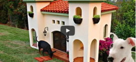 Kinds Of Dog House