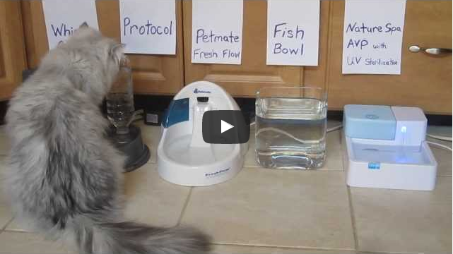 The Cat Water Fountain | Sweet Home